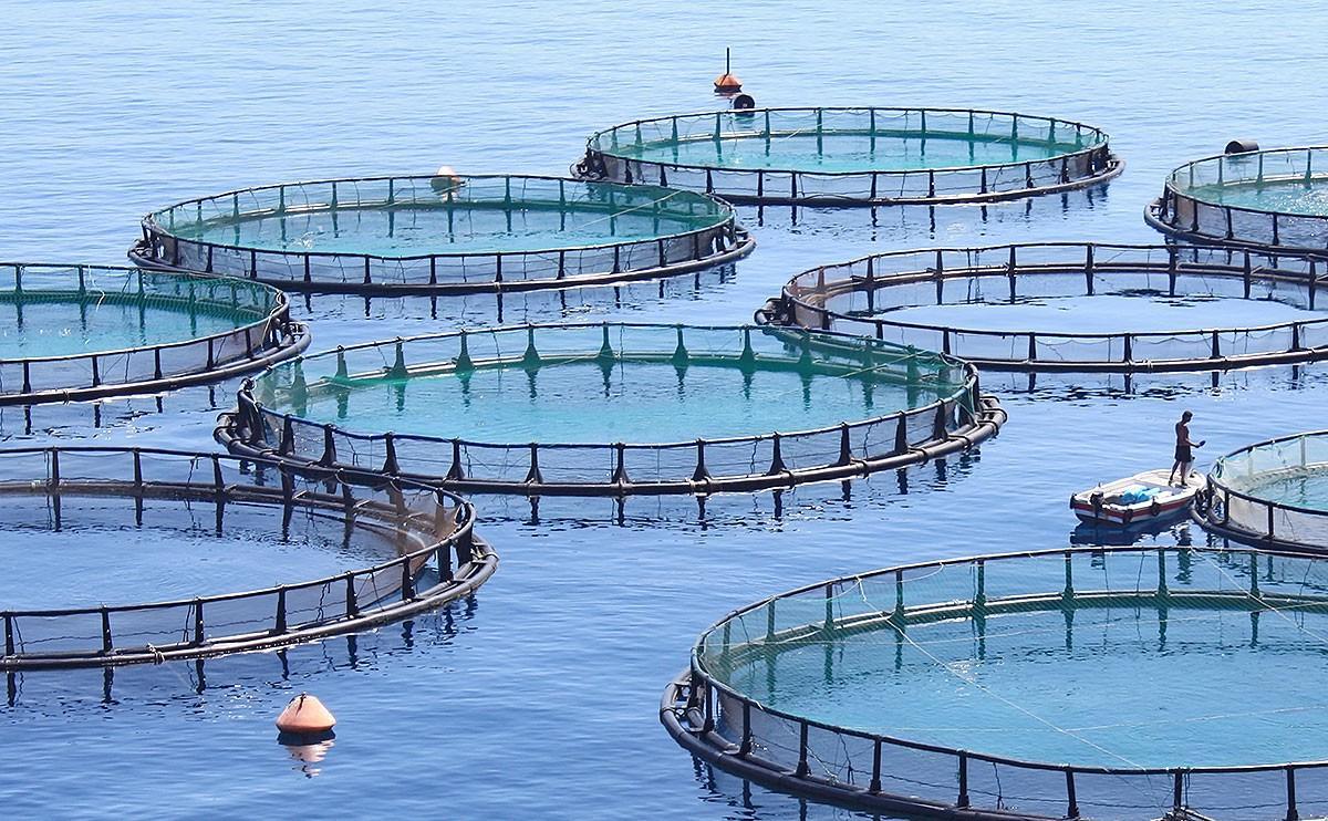 Grupuri de pompare fluide pentru acvacultura | O companie din Danemarca a reusit sa fie líder mondial datorita noilor grupuri de pompare