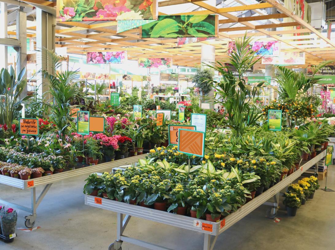 HORNBACH: Topul celor mai cumparate plante decorative si cum pot fi incadrate in ambientul locuintei
