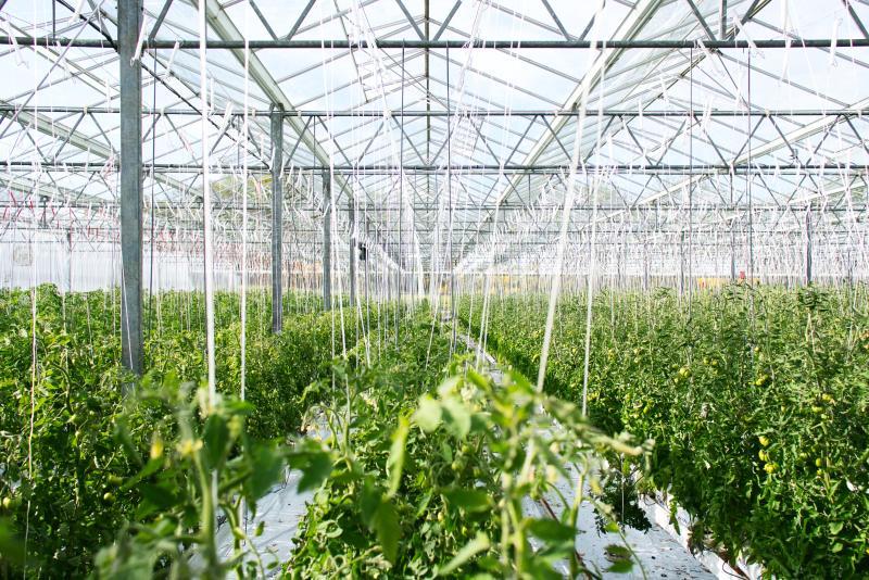 Master Engineering, compania de consultanta tehnica si de solutii profesionale de pompare fluide,  vine in intampinarea industriei agricole cu solutii tehnice si pompe pentru sisteme de irigatii